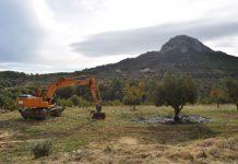 La Xylella afecta ja als 33 municipis de la Marina Alta